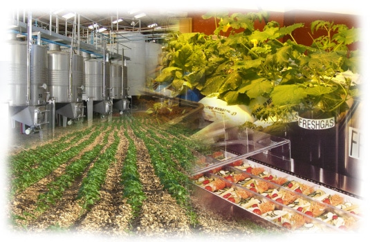 Ingeniería Agroalimentaria