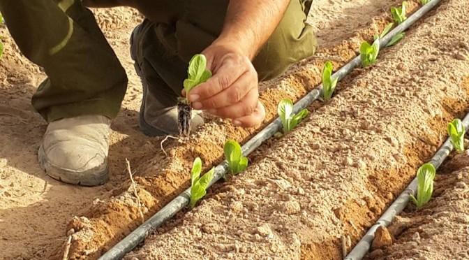 ingeniero agronómo fitotecnista