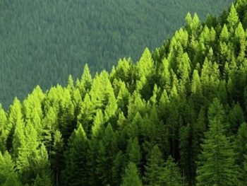 Ingeniería forestal