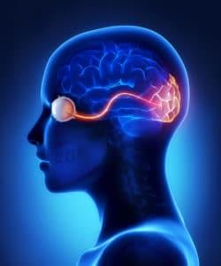 Neuroftalmología