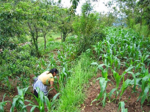 ingeniería agroforestal