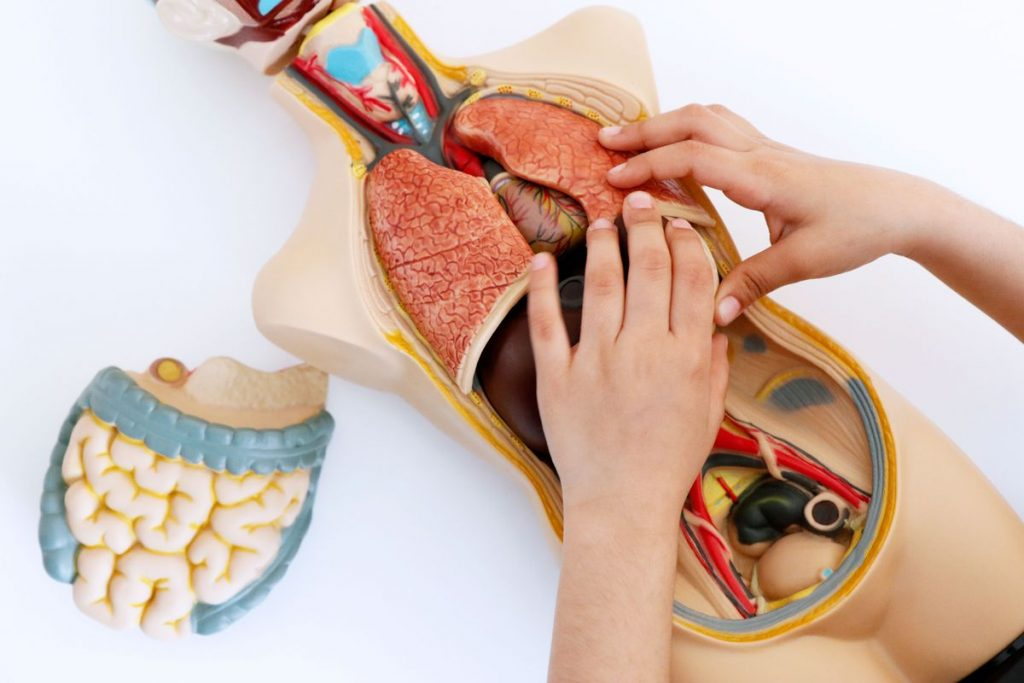 Anatomista: Todo lo que debes saber relacionado esta profesión