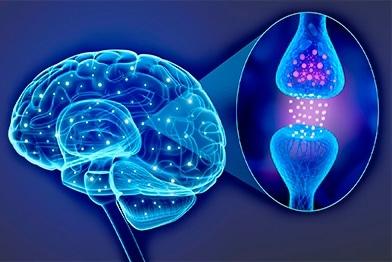 Neurofisiología: Qué es, carrera y mucho más