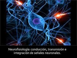 Neurofisiología completa