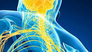 Neurofisiología especialidad: