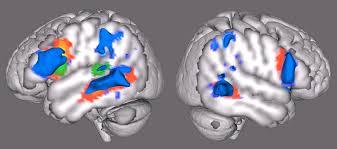 Neurofisiología en psicología: