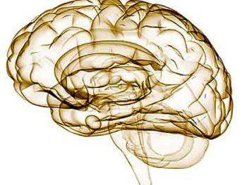 la neurologia cerebro