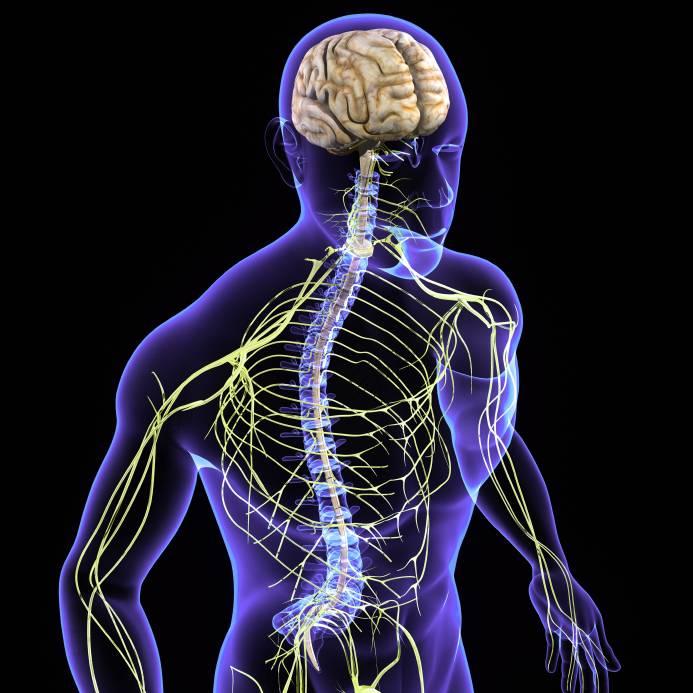 Neurología: Qué es, funciones y mucho más sobre ella
